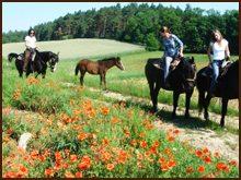 pensjonat dla koni 4