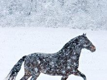 Horses Running in a Snowstorm